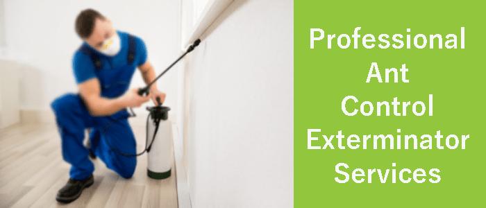 Professional Ant Control Exterminator Services
