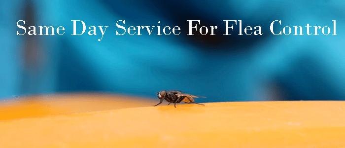 Same Day Service For Flea Control Services